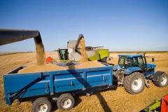 Зерно фуражное зерновые культуры выращивание и