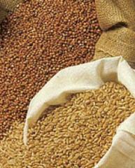 Культуры кормовые зерновые выращивание и продажа в