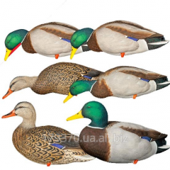 Effigy of a duck of full-volume Avian-X Full-Body Mallard Decoys with Decoy Bag