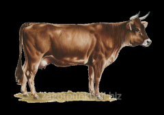 Skins of cattle