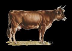 Pieles de ganado bovino