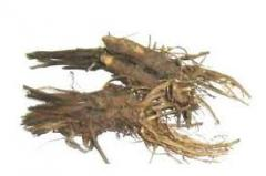 Эхинaцея, корень