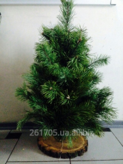 Pine from branches