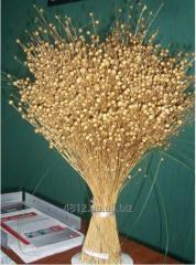 Flax seeds Elite grade Eureka