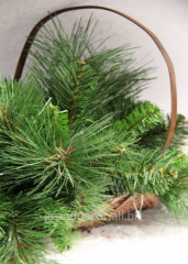 Basket with fir-tree branches