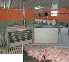 Básculas para pesar cerdos