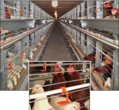 Батареи клеточные для птицеводства. Вентилируемая