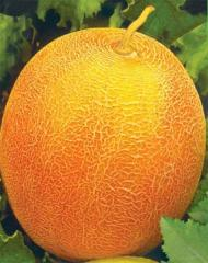 "Melon seeds ""Bereginya"
