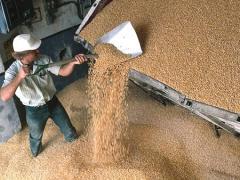 Зерно, зерновые культуры, соя, ячмень, пшеница,