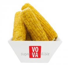 The frozen corn ears