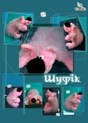 Toys large-size soft TM Tkachuk. Producer.