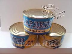 Baltic Sardines in oil. Sardinia Balt_ysk_ z for