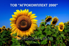 Гибрид подсолнечника НС- Сумо-2018. Под Гранстар.