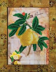 Fruit. Lemon SHOUTING 5515