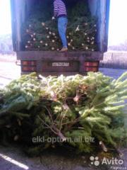 Новогодняя живая елка в Запорожье оптом