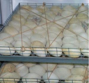 Яйца гусиные инкубационные.