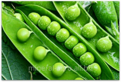 Peas sowing Gotivsky