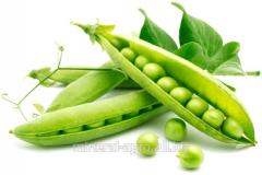 Peas seeds Zenkovsky elite, primary seed