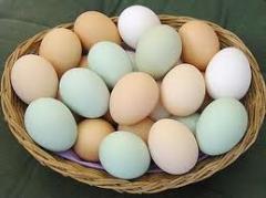 Eggs for expor