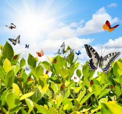 Photowall-paper greens and butterflies