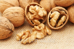 High quality organic thin shell walnuts
