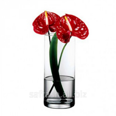 Cylindrical glass vase of Pasabahce Flora 30 of cm