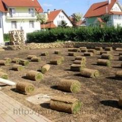 Lawn grass in rolls