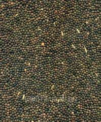 Hạt giống đậu Vika