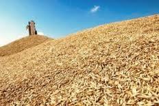 Зерно в Украине, Купить, Цена