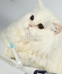 Пробиотик БПС-44 для мелких домашних