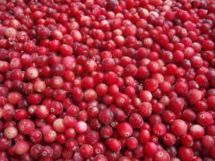 The cranberry frozen