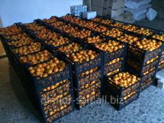 $ Georgia tangerine 0.33 for 1 kg