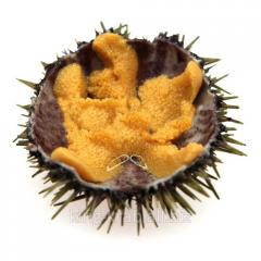 Caviar of a sea hedgehog of 200 g