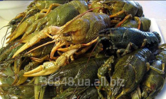 Crabs live in fresh and cooked wholesale and