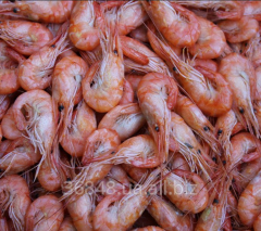 Shrimps the Black Sea large averages small real