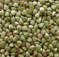Buckwheat green