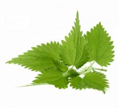 Nettle leaf, nettle leaves