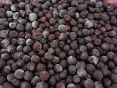 The bilberry frozen / IQF Wild Blueberry