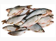 Рыба речная разведение и реализация(купить, заказать оптом)