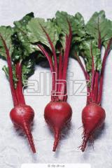 Table beet, Beet red, wholesale, retail