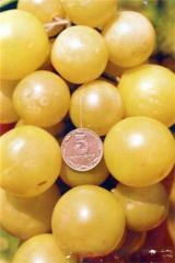 Grapes shanks Grapes Anthony the Great, sale,