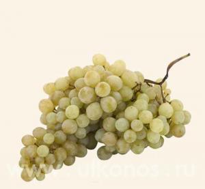 Grapes saplings. Grapes Ballet sultana grape.