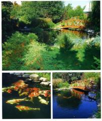 Проектирование и реконструкция прудов. Прудовые