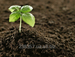 Органическое удобрение Сапропель