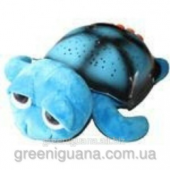 Musical turtle of Tony, blue