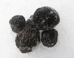 Truffles fresh frozen