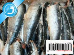 Sardine Pacific fresh-frozen (West Pacific