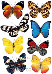 Бабочки 24