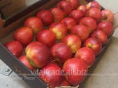 Apples Dzhonagored (Jonagored)