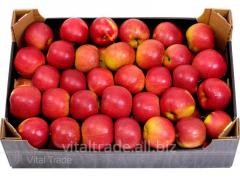 Apples Aydared (Idared)